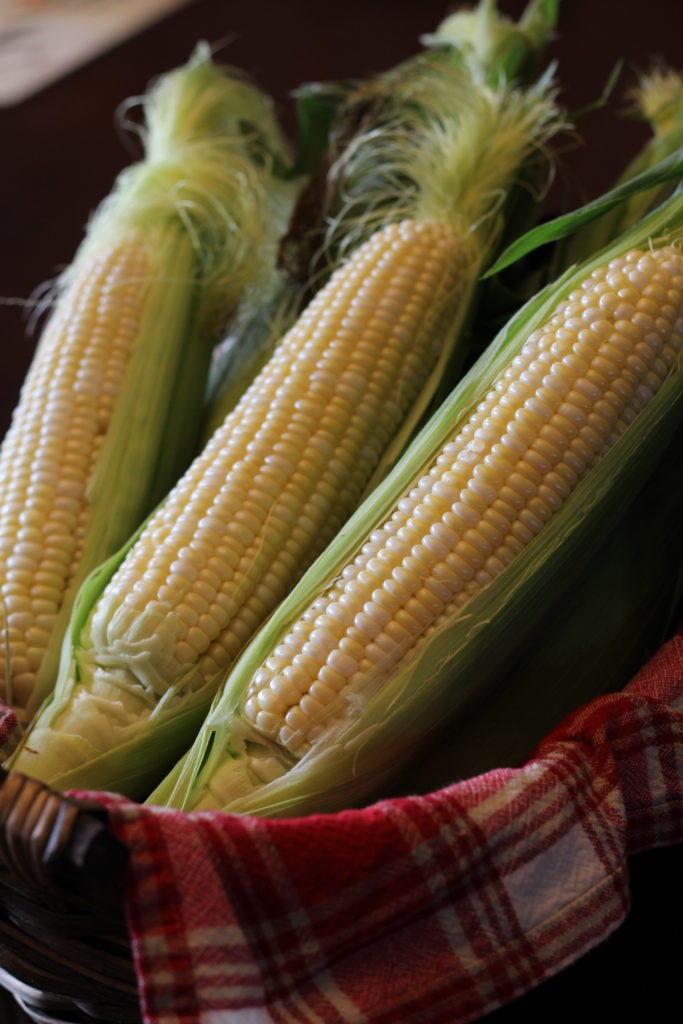 Comment choisir son maïs?